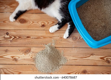 Cat paws and tray litter toilet with a filler on the wooden floor boards. Copy space