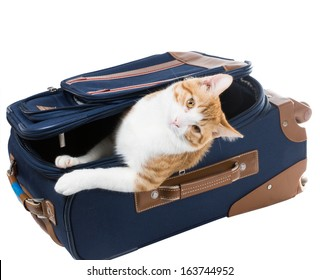 Cat peeking out of a suitcase