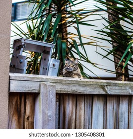 Cat peeking over the fence