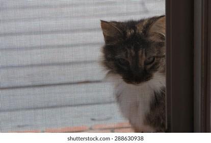 Cat peering through a screen door.