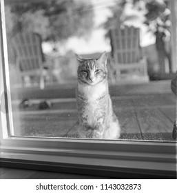 A cat peering through the window, shot on medium format film