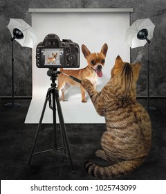 The cat photographer takes picture of his client dachshund in photo studio.