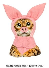 cat in pig costume, the symbol of the new year 2019