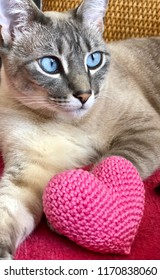 Cat and Pink Tricot Heart