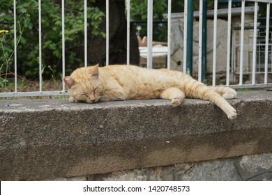 cat at plane tree Hippocrates Kos Town Kos Island Greece May