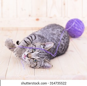 cat playing with a ball color purple on wood background