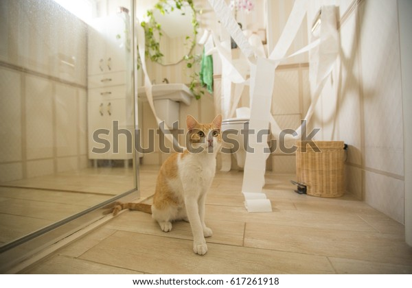 Cat playing in the bathroom with toilet paper
