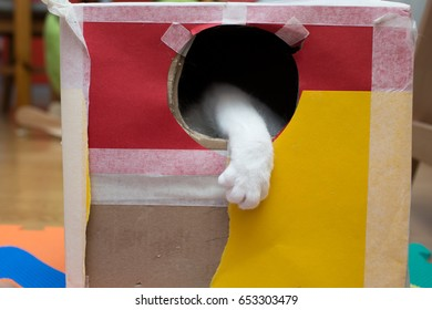 cat playing in the cardboard box