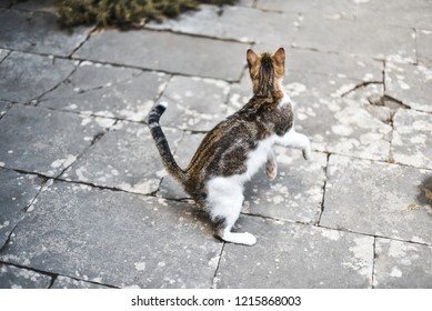 Cat playing in city