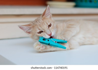 Cat playing with clothes peg