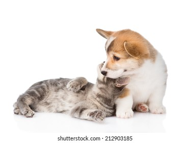 cat playing with a dog. Isolated on white background