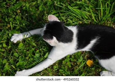 Cat playing with grass