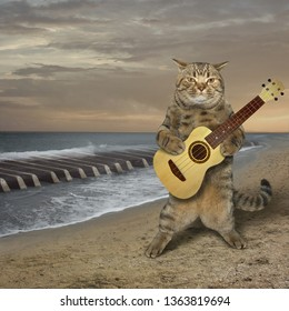 The cat is playing the guitar on the deserted beach. The sea waves looks like the piano keys.