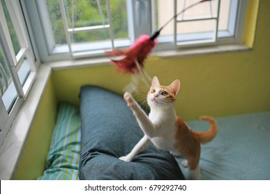 cat playing have fun in the room