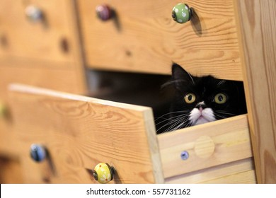 A cat playing hide and seek inside the drawer.