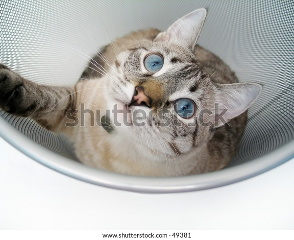 A cat playing inside a garbage can.
