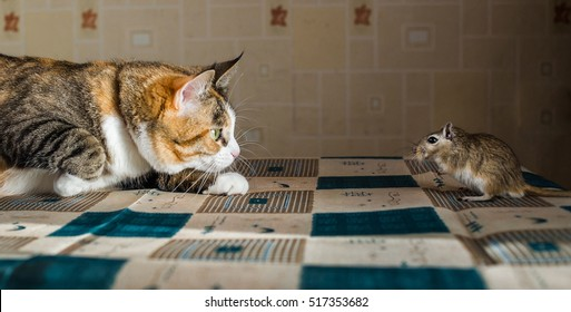Cat playing with little gerbil mouse on the table  serving cutlery. Concepts of prey, food, pest
