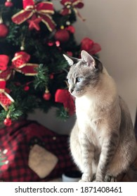cat playing on the christmas tree