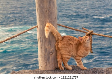 Cat playing on coast