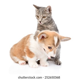 Cat playing with a Pembroke Welsh Corgi puppy. Isolated on white background