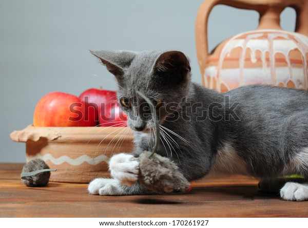 Cat playing with a plush mouse