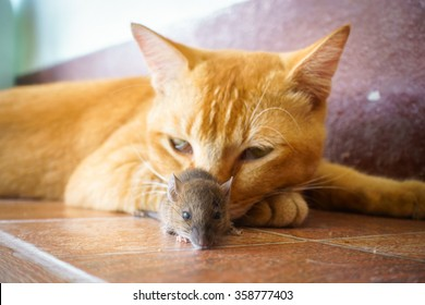 Cats Rats Images, Stock Photos & Vectors | Shutterstock