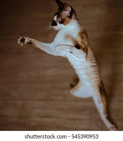 Cat playing, standing on hind legs, catches a fly.