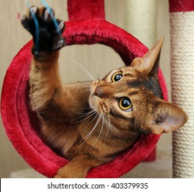 Cat playing with toy, feathered pole