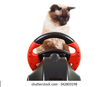 Cat playing a video game console steering wheel with deadpan expression on his face fluffy, isolated on white