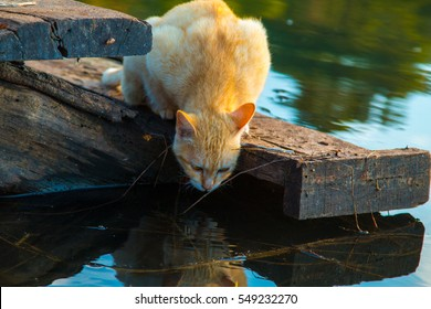 Cat playing the Waterfront