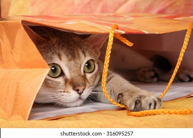The cat plays in the package