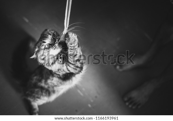 cat-plays-rope-he-caught-600w-1166193961