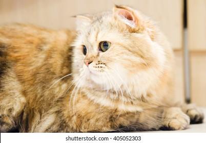 Cat Portrait, Animals Background Concept