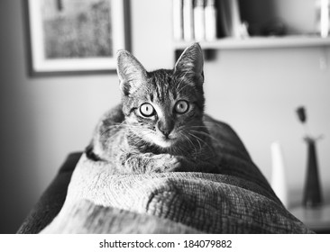 Cat portrait in black and white. Cat is looking at camera.