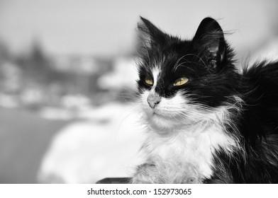 Cat portrait. B&W photo