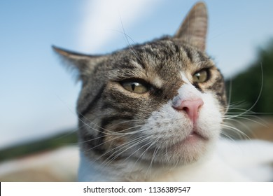 Cat portrait, extreme close up