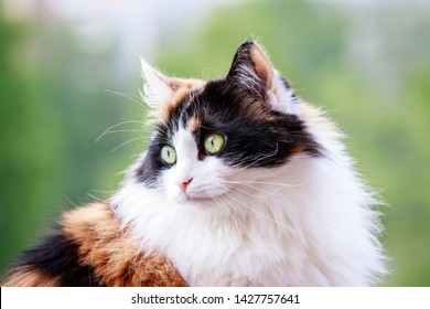 Cat portrait, cat cat with green eyes in blurry background