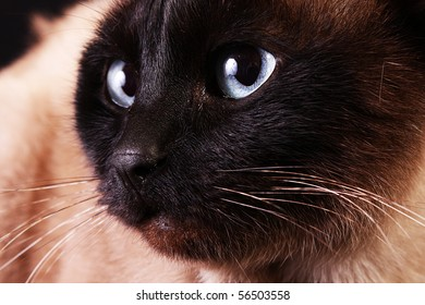 Cat portrait on black background