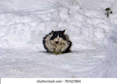 Cat portrait in the white snow background in winter time
