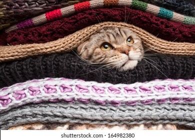 The cat is preparing for winter, wrapped up in a pile of woolen clothes