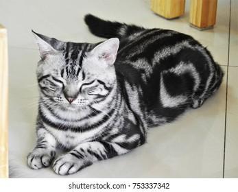A cat preteds to sleep