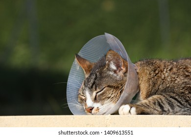Cat with protective collar. Sick cat. Cat wearing a protective buster collar (also known as an elizabethan collars) to protect it from scratching the wound after operation