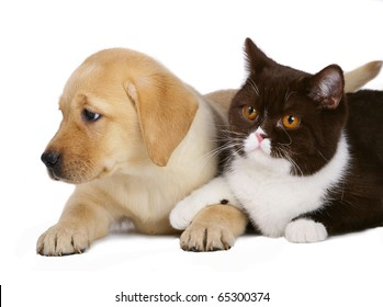 Cat and pup on a white background.