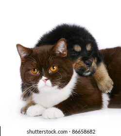 Cat and puppy on white background.