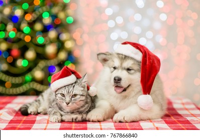 Cat and puppy in red christmas hats on a background of the Christmas tree