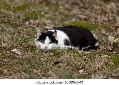 cat pushes herself into the grass