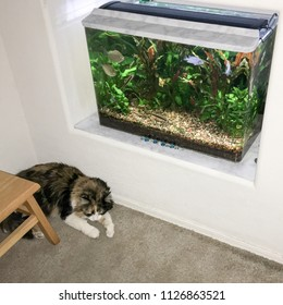 Cat quietly resting next to a fish tank in wall niche