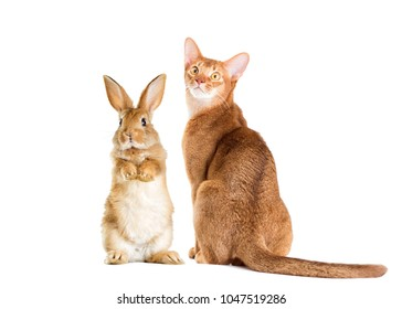 cat and rabbit together on a white background