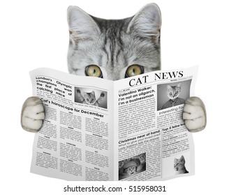 cat reading a newspaper