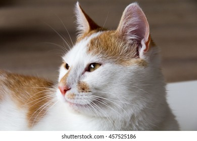 Cat really looking away